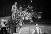 2018-01-24 - Cirque Monaco 42eme Festival - 5D3_7254